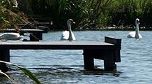 Menu Item - Pond Platforms